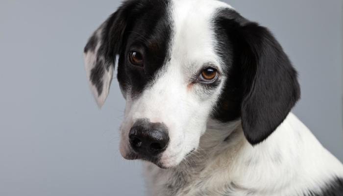 soigner des chiens anxieux