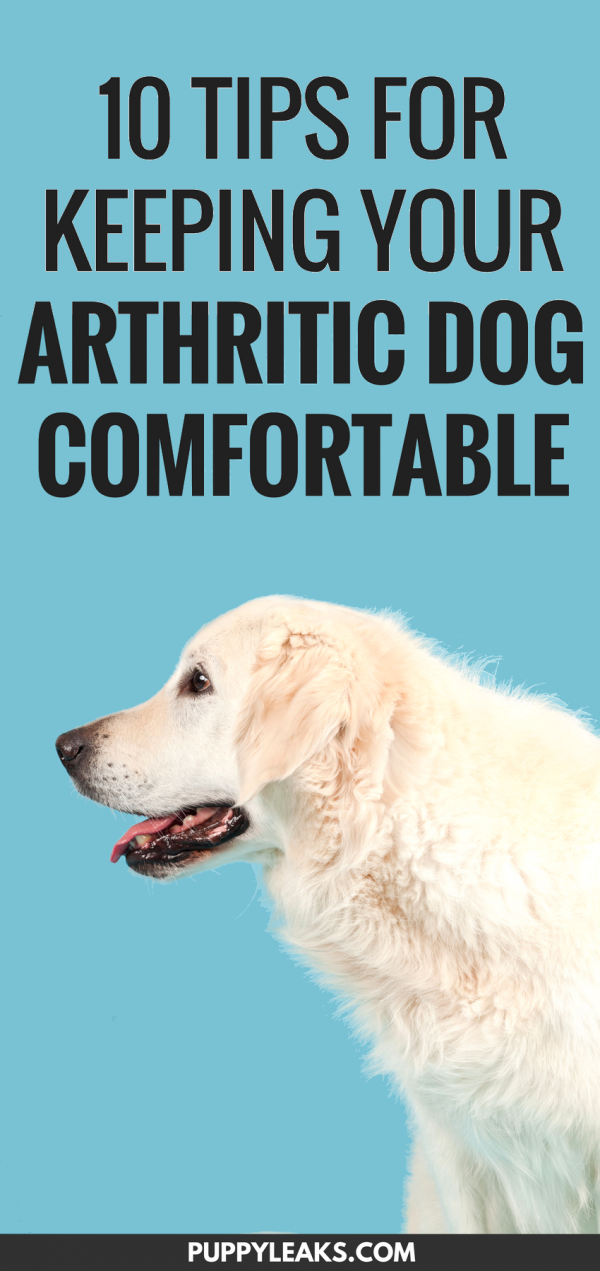 Here's 10 ways to keep your arthritic dog fit, active and comfortable, including plenty of low impact exercise ideas. How to keep your dog with arthritis comfortable. #dogs #doghealth #dogtips