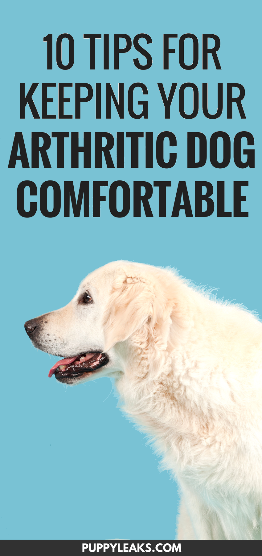 Tips to Keep Your Arthritic Dog Comfortable