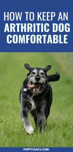 Keep arthritic dog comfortable