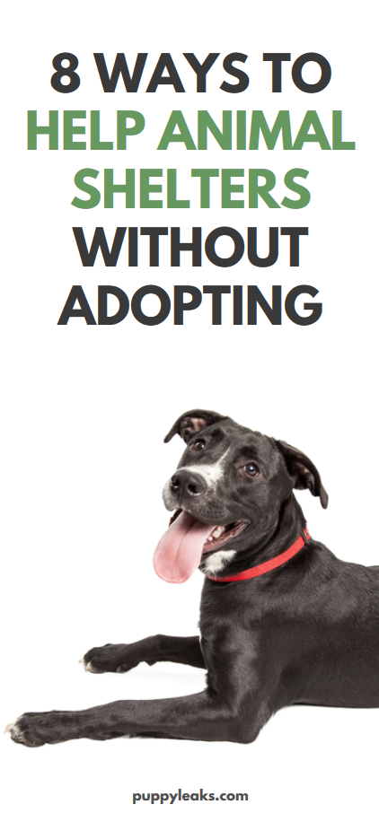 8 Ways to Help Animal Shelters Without Adopting