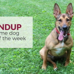 Roundup 66: Favorite Dog Articles & Videos of the Week