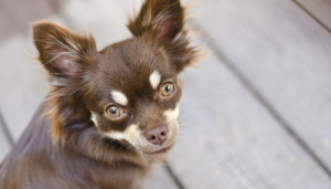 9% of Dogs in Texas Found to Carry Kissing Bug Disease