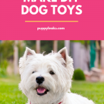 Easy to Make DIY Dog Toys