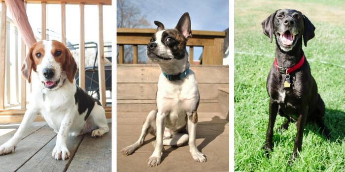 adopt a dog southeast michigan