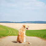 30 Powerful Quotes About Losing a Dog & Dealing With Grief