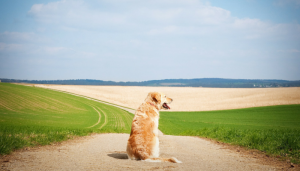 20 Quotes About Losing a Dog