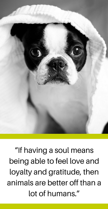 Losing A Dog Quotes Stunning 30 Powerful Quotes About Losing A Dog & Dealing With Grief  Puppy
