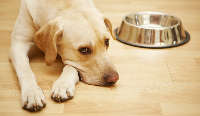 Why Do Dogs Guard Their Food?