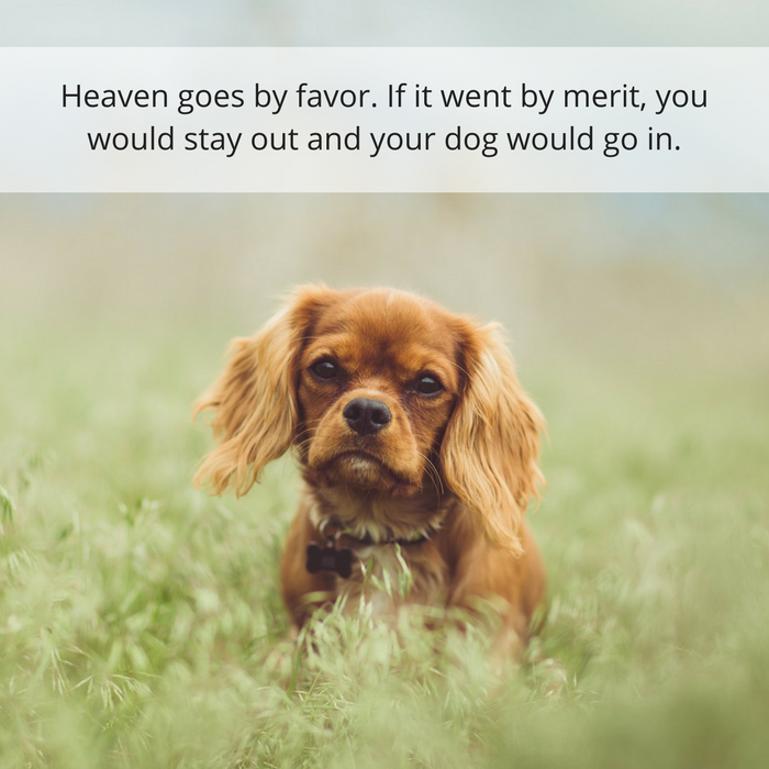 30 Quotes About Losing a Dog