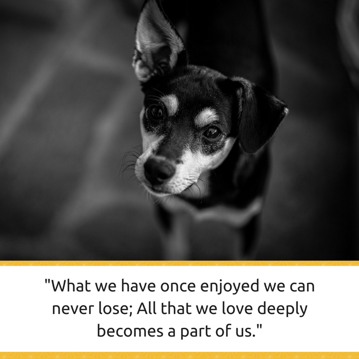 Loss Of A Pet Quote Impressive 30 Powerful Quotes About Losing A Dog & Dealing With Grief  Puppy