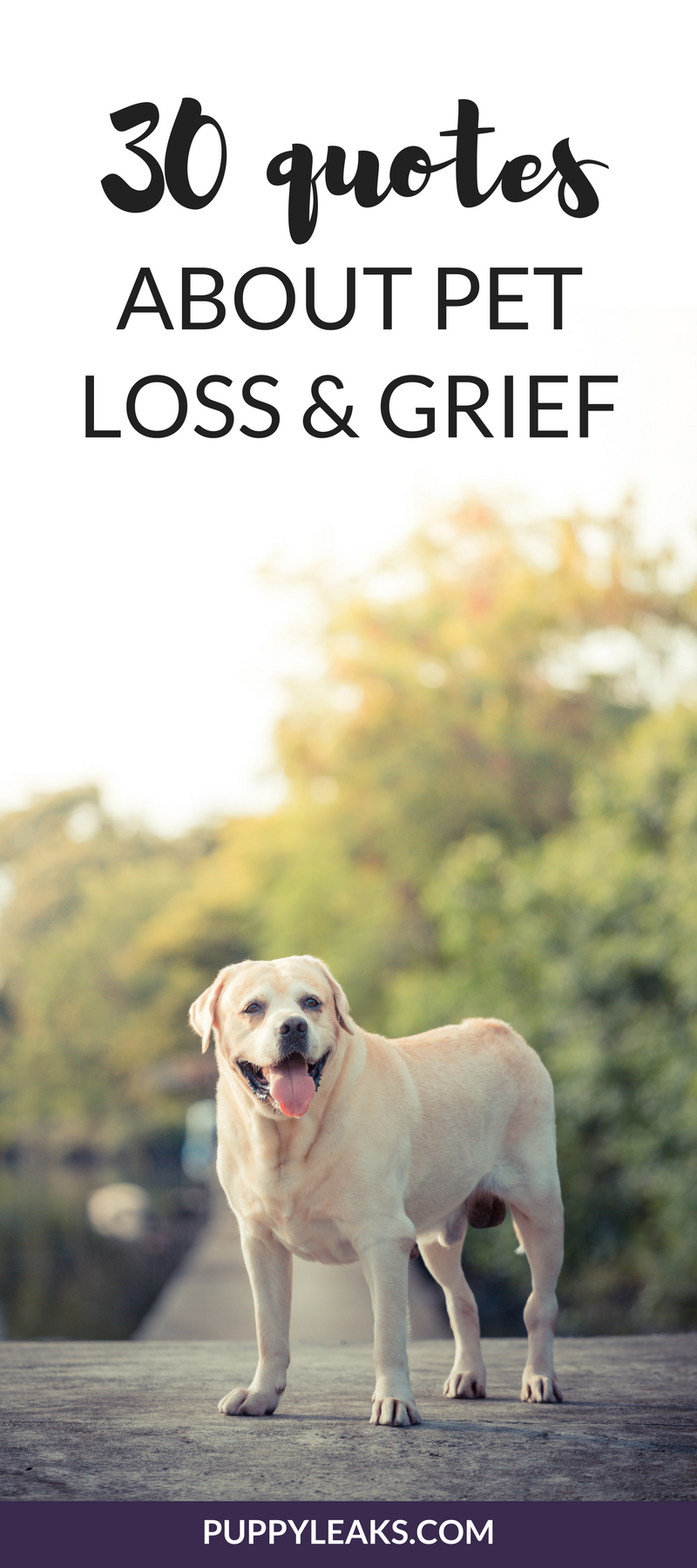 Losing A Dog Quotes Interesting 30 Powerful Quotes About Losing A Dog & Dealing With Grief  Puppy