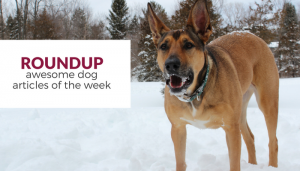 Roundup: Favorite Dog Articles of the Week