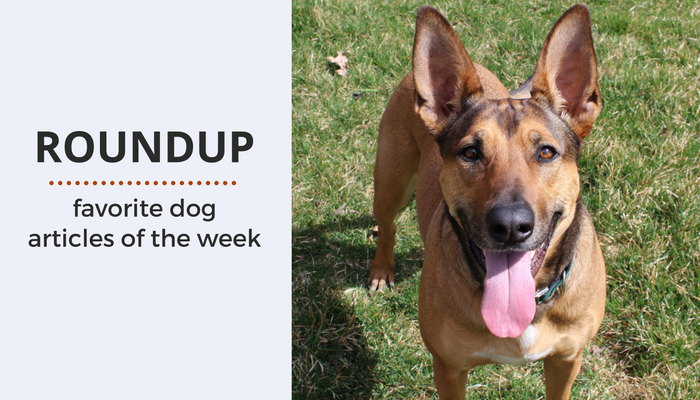 Dog Roundup: Favorite Dog Articles & Videos of the Week