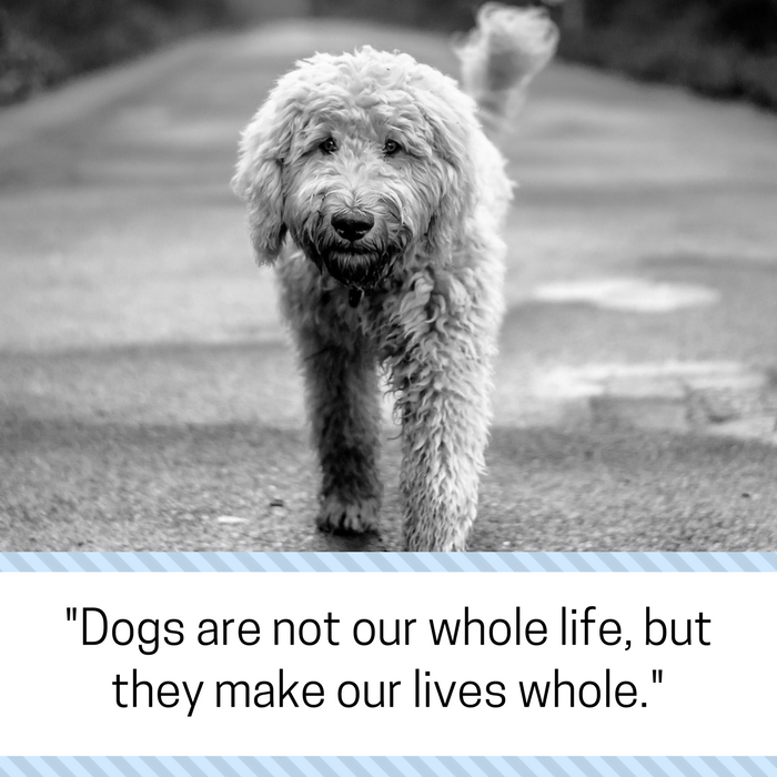 Losing A Dog Quotes Beauteous 30 Powerful Quotes About Losing A Dog & Dealing With Grief  Puppy