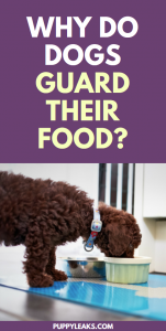 Why do dogs guard food