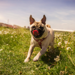 25 Ways to Make Your Dog Happy