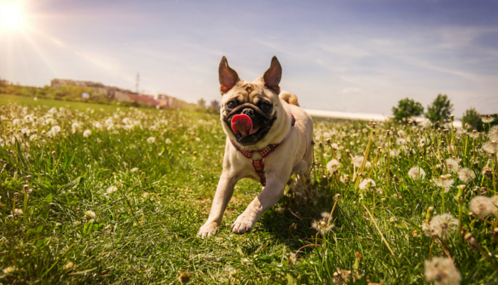 Ways to Keep Your Dog Happy