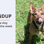 Roundup 83: Favorite Dog Articles, Videos & Deals of the Week