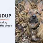 Roundup 84: Favorite Dog Articles, Videos & Deals of the Week