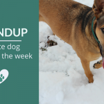 Roundup 85: Favorite Dog Articles, Videos & Deals of the Week