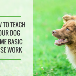 Teach Your Dog Some Basic Nose Work