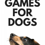 Nose work games for dogs