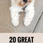 20 Great Pinterest Boards For Dog Lovers to Follow