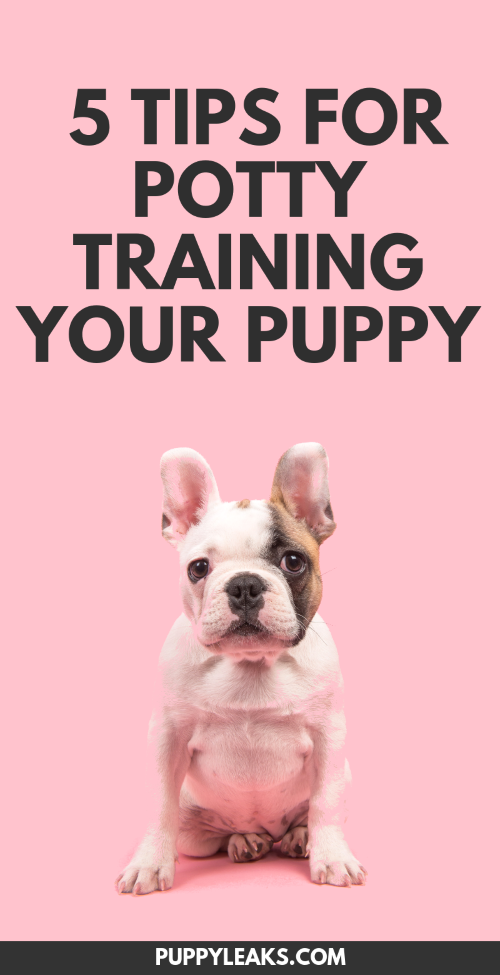5 Simple Tips For Potty Training Your Puppy - Puppy Leaks