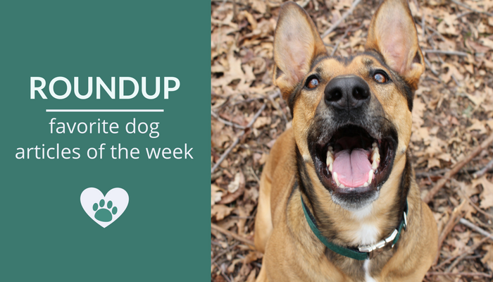 Favorite Dog Articles, Deals & Videos of the Week