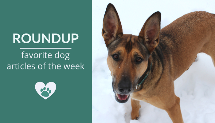 Favorite Dog Articles of the Week