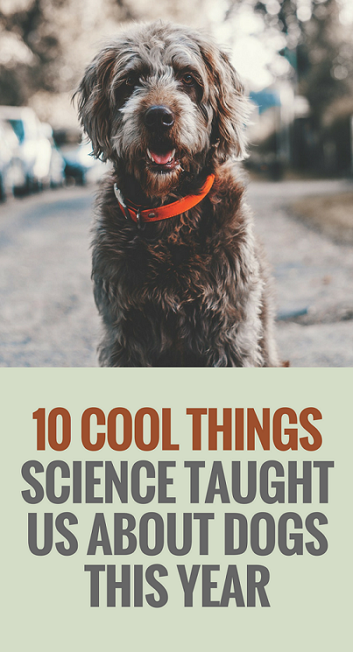 12 Things We Learned About Dogs Through Science