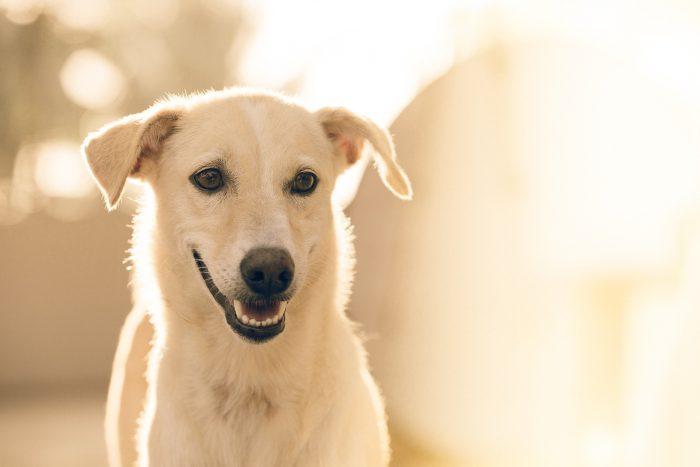 Gérer une légère angoisse de séparation chez le chien