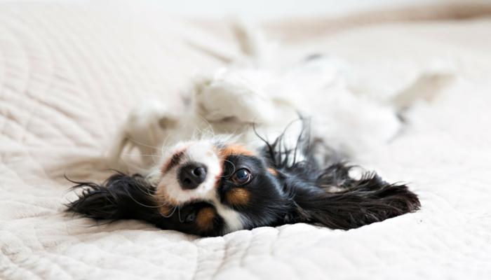 Comment gérer une légère anxiété de séparation canine