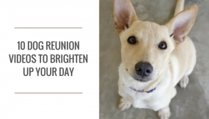 10 of the Best Dog Reunion Videos