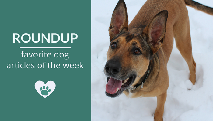 Favorite Dog Articles & Videos of the Week