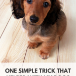 One trick for managing canine separation anxiety