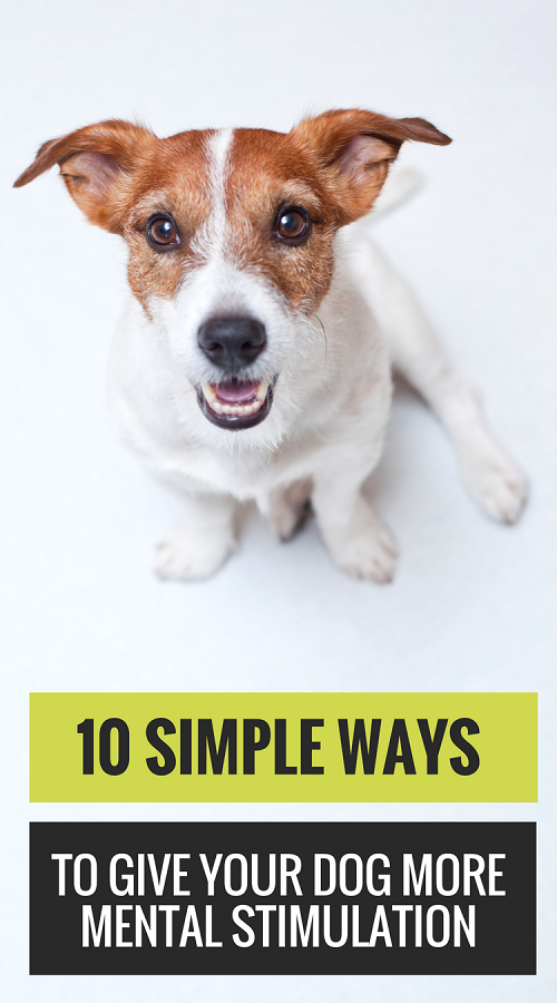 10 Easy Ways to Give Your Dog More Mental Stimulation