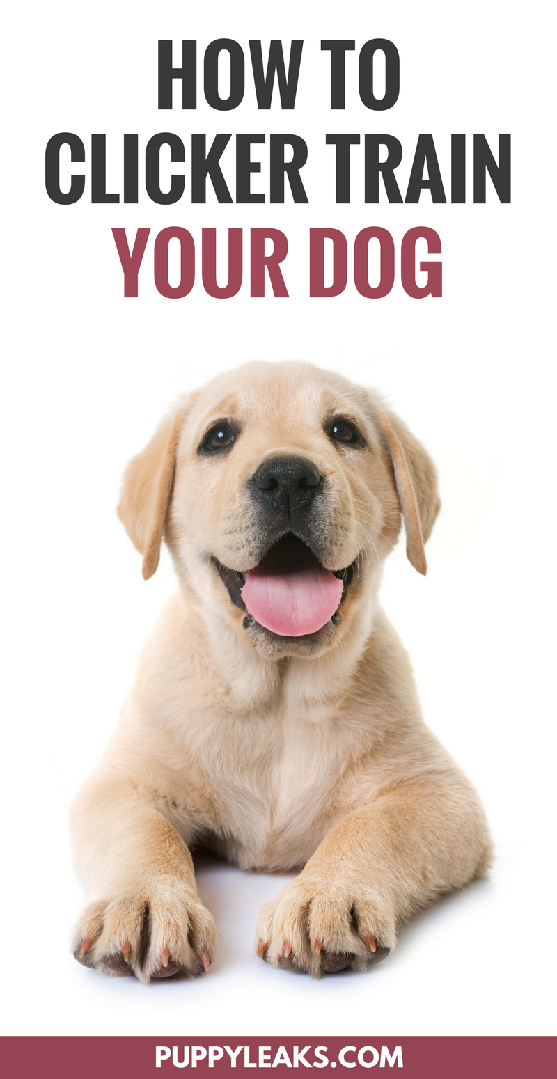 How to Clicker Train Your Dog. How to get started with clicker training your new dog.
