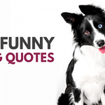 30 Cute & Funny Dog Quotes