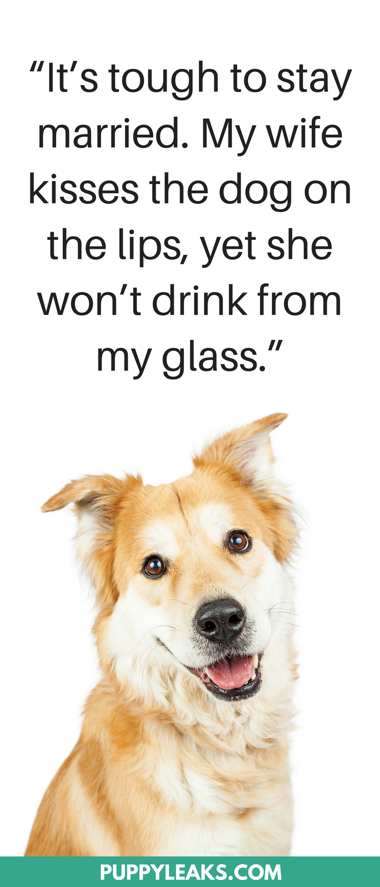 30 Cute & Funny Dog Quotes #funnydogs #dogs #funnyquotes #dogquotes