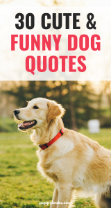 30 Funny Dog Quotes