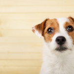 Why Do Dogs Drink From the Toilet?