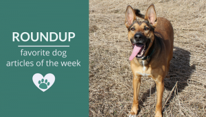 Roundup 100: Favorite Dog Articles & Videos of the Week
