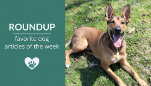 Roundup 97: Favorite Dog Articles, Deals & Videos of the Week