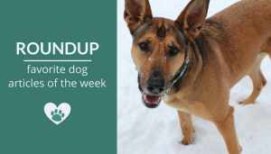 Roundup 98: Favorite Dog Articles, Videos & Deals of the Week