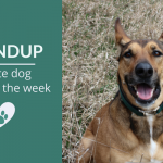 Roundup 101: Favorite Dog Articles & Videos of the Week