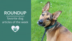 Roundup 102: Favorite Dog Articles & Videos of the Week