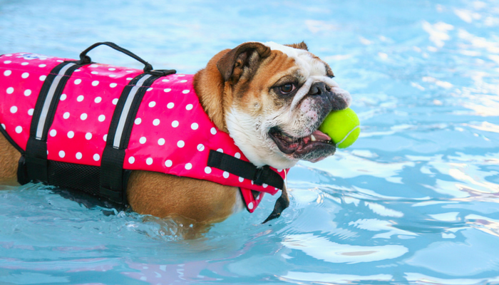 Image result for dogs swimming