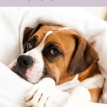 Why Do Dogs Love to Cuddle?